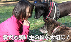 犬のしつけは飼い主との絆