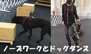 犬のボケ防止 ノーズワークとドッグダンス