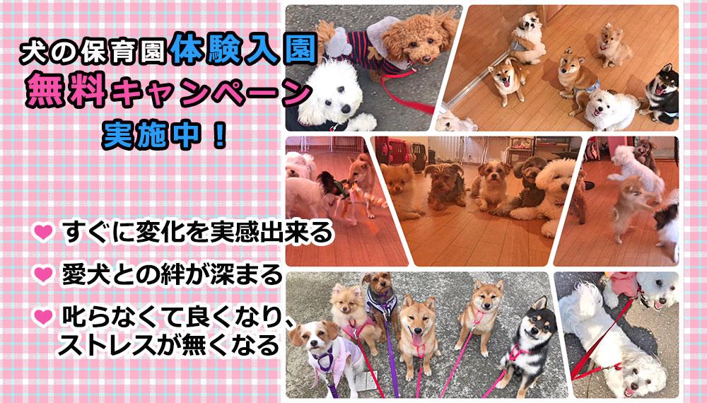 犬の保育園体験入園無料