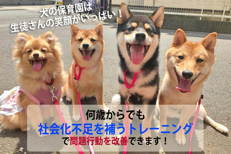犬の保育園は成犬も社会化トレーニング大丈夫