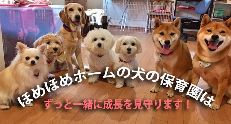 犬の保育園 継続することで 一緒に成長を見守ります