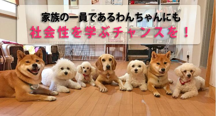 犬の保育園で社会性を学ぶ