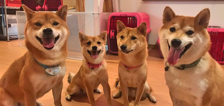 犬の保育園生 柴犬 料金ページ