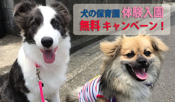 犬の保育園 体験入園無料