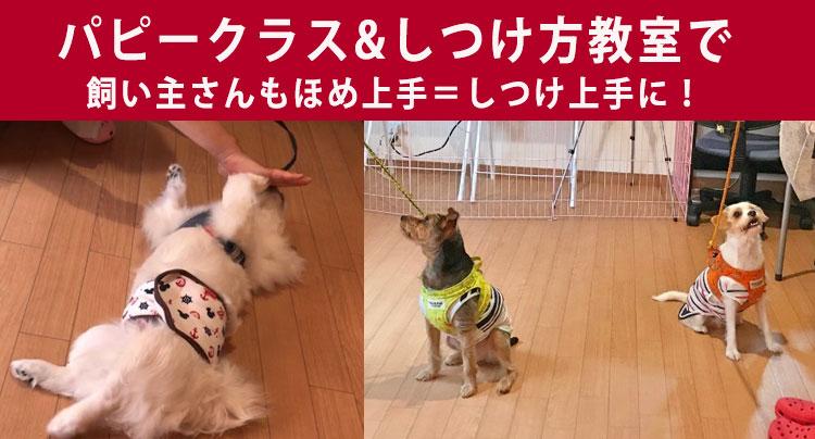 パピークラス 犬のしつけ方教室で 飼い主さんもほめ上手に