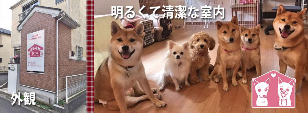 横浜市内 自宅で運営の犬の保育園 外観と室内