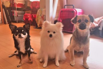 犬の保育園の様子