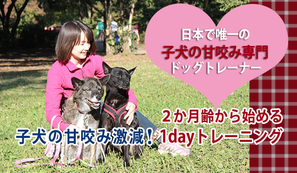 子犬の甘噛み専門ドッグトレーナー 1DAYドッグトレーニング